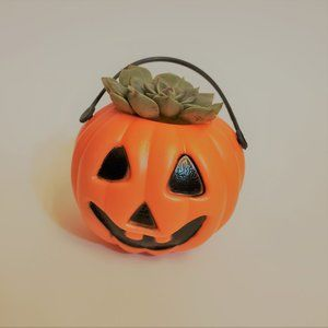 Other - Mini Halloween Pumpkin Succulent 2""